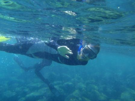 Rouquemouttus aquaticus