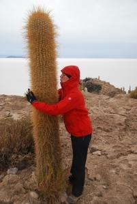 Le cactus cardone, l'ami d'Audrey