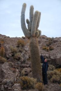 Petit calcul : à raison d'une pousse de 1 cm par an, quel est l'âge de ce vénérable cactus ?