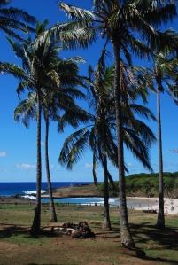Les cocotiers sur la plage d'Anakena
