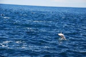 On manque d'outils de retouche d'images mais si vous faîtes l'effort de zoomer sur le dauphin à droite, vous verrez qu'il tape un joli salto arrière :D