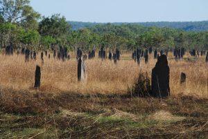 Les termitières dites magnétiques, qui s'orientent en fonction du vent et du soleil.