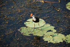 """On a oublié le nom de ce piaf mais retenu son surnom : le """"Jesus Bird"""" ! Pas étonnant qu'il puisse marcher sur l'eau avec des orteils aussi longs !"""
