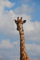 si vous ne savez pas quel animal c'est, on ne peut plus rien faire pour vous...