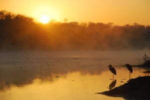 Petit matin au Kruger