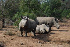 Une famille de rhinos