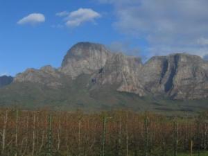 Les vignes au pied de la montagne