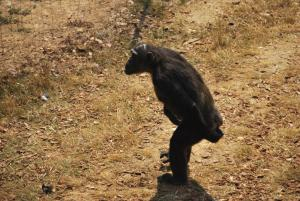 Deja bien avance sur le chemin de l'evolution, lui !